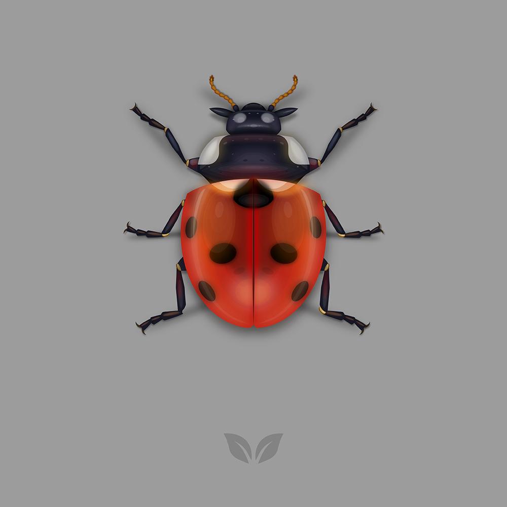 7-Spotted-Ladybug.jpg