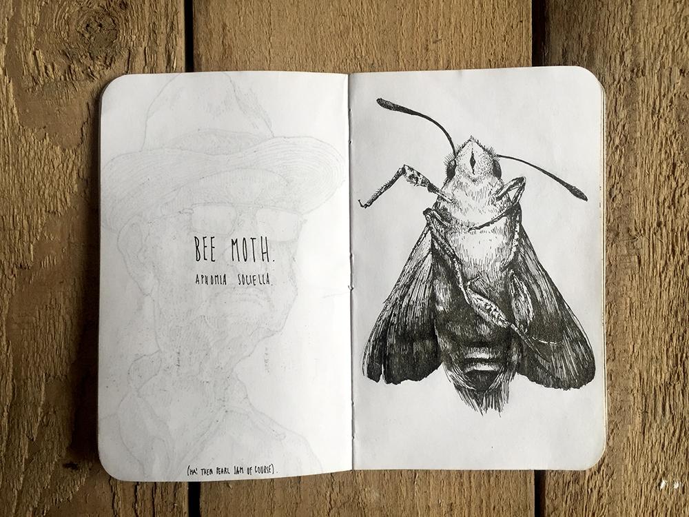 BEE-MOTH-SKETCH.jpg