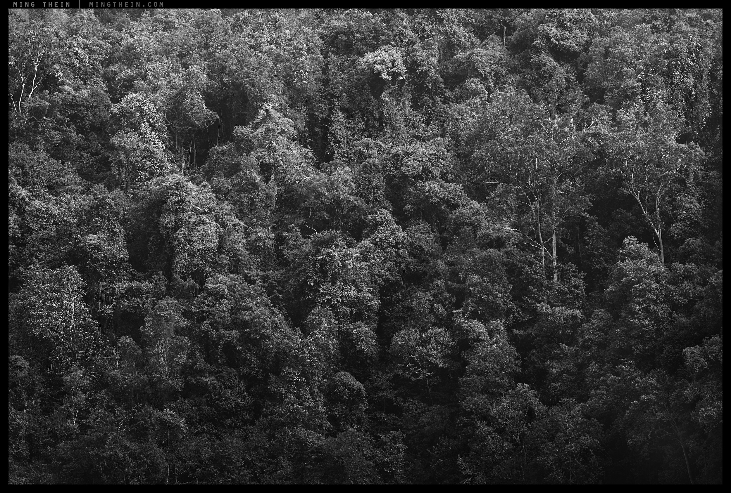 _8A03802 forest II.jpg
