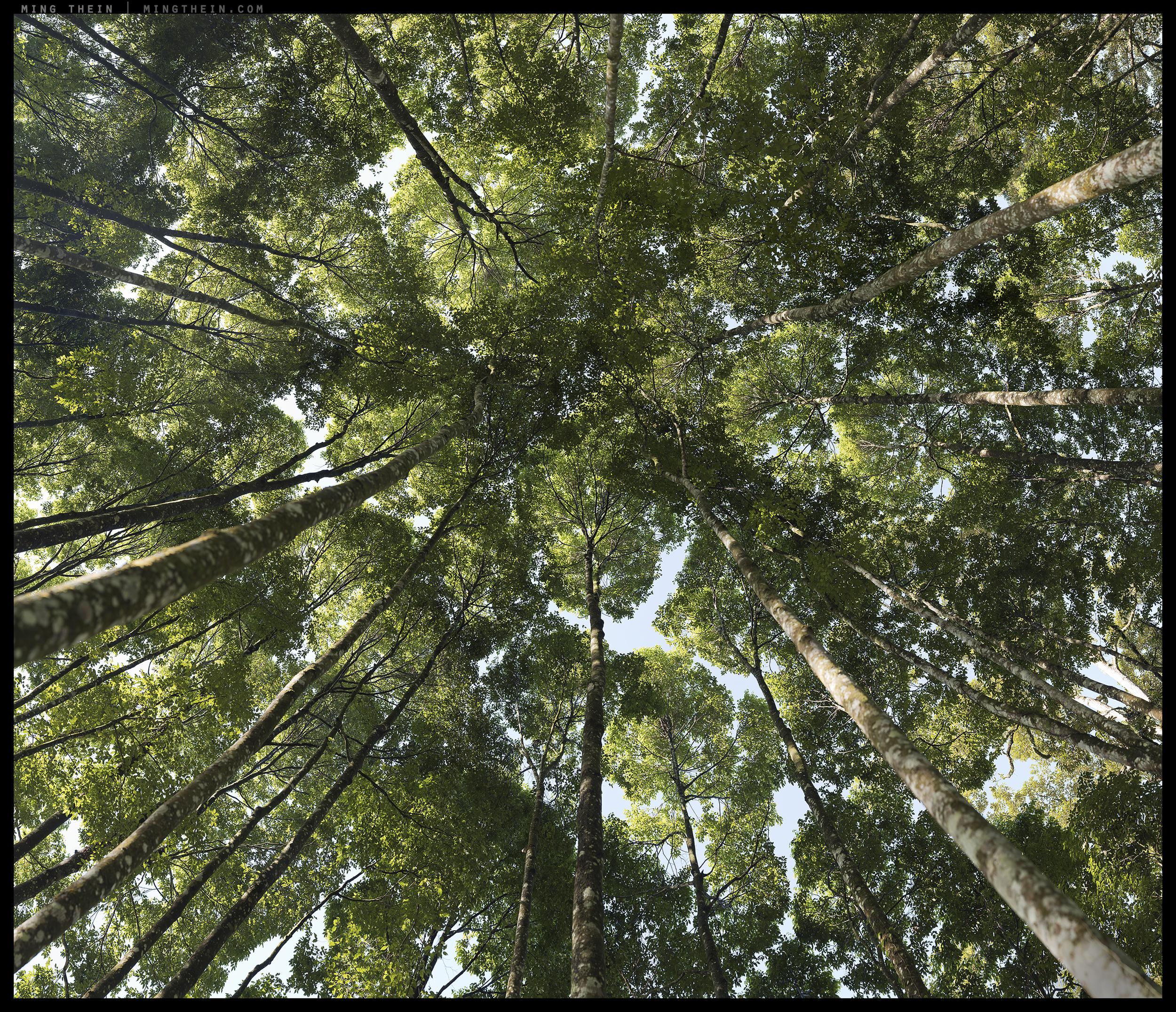 _8B010973-1007 16-37 forest vii v3 14k.jpg