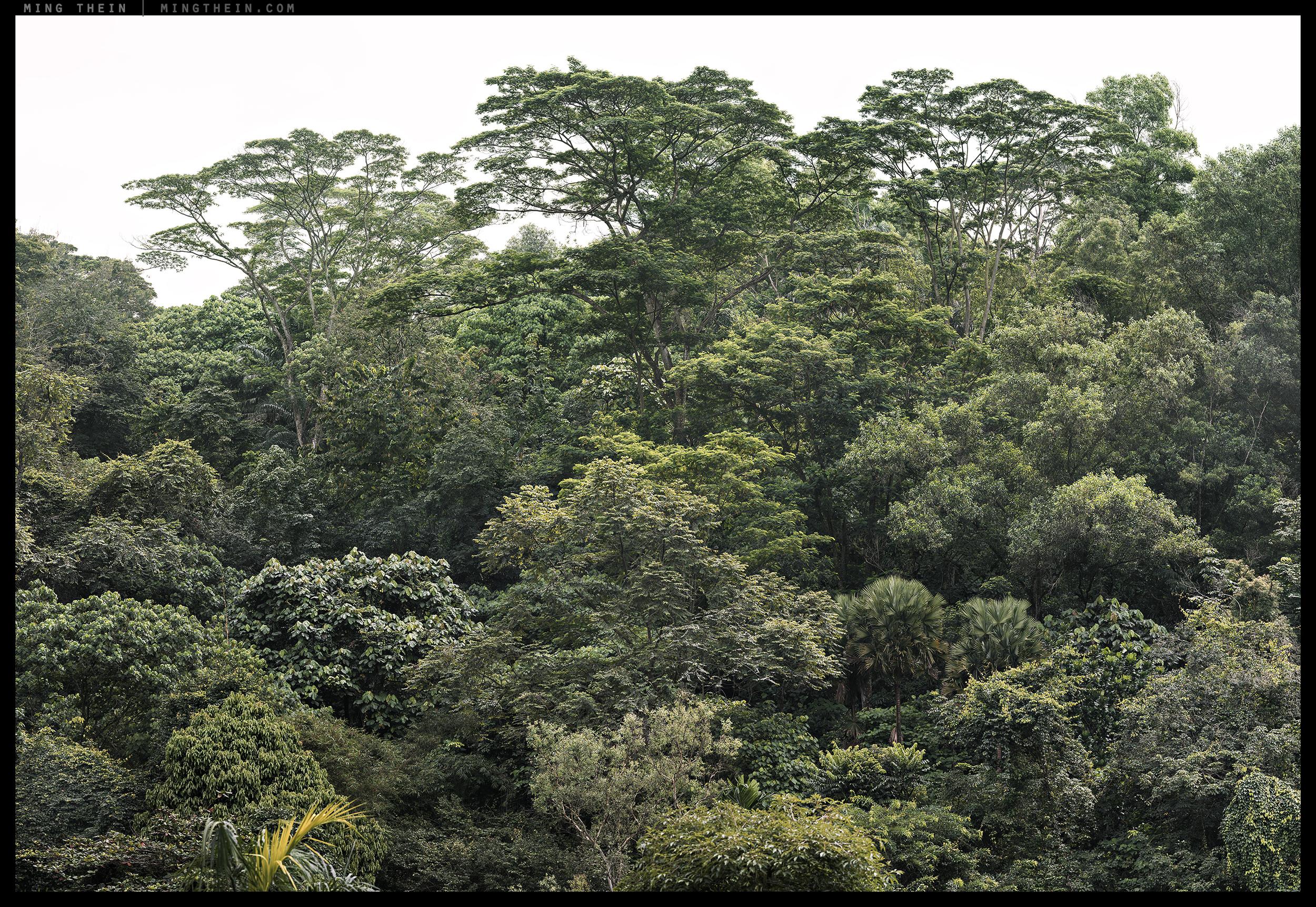_8B13066-149 v2 forest XIV 20k.jpg