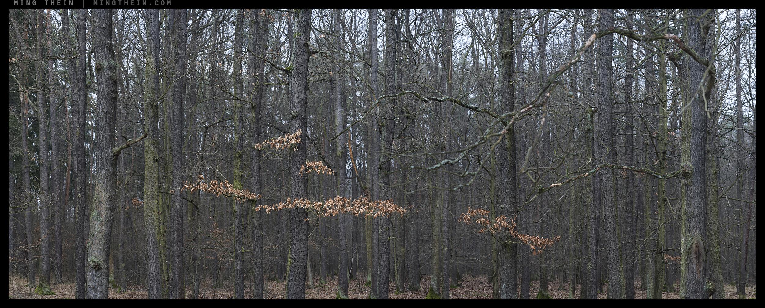 _8B18698__8B18723 15k forest XXVI.jpg