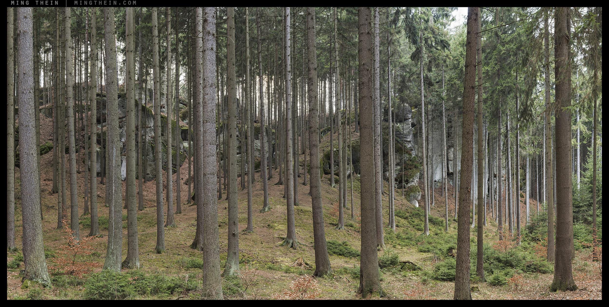 _8B19951__8B19983 15k forest XXVIII.jpg