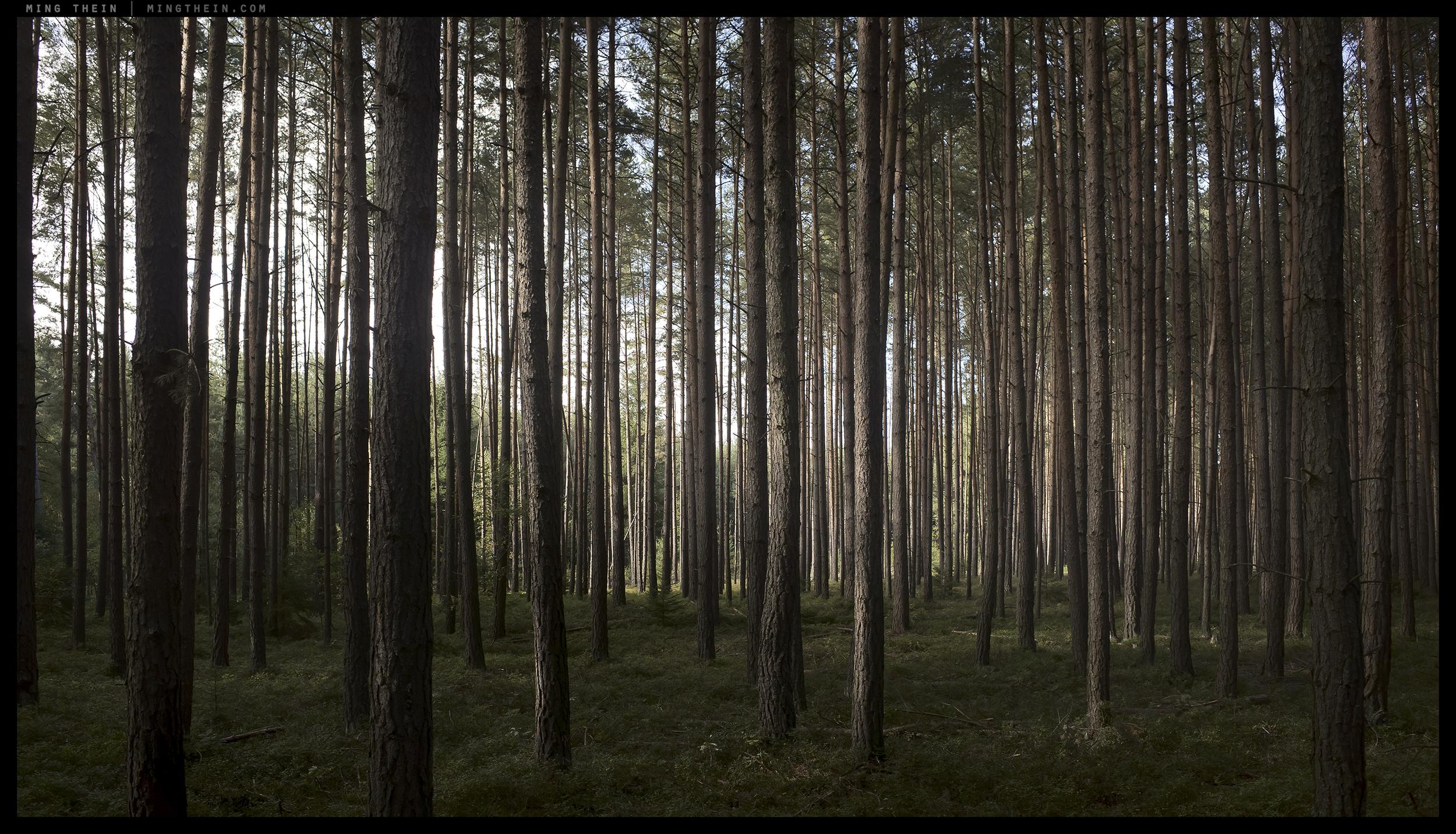 _G002003 forest I.jpg