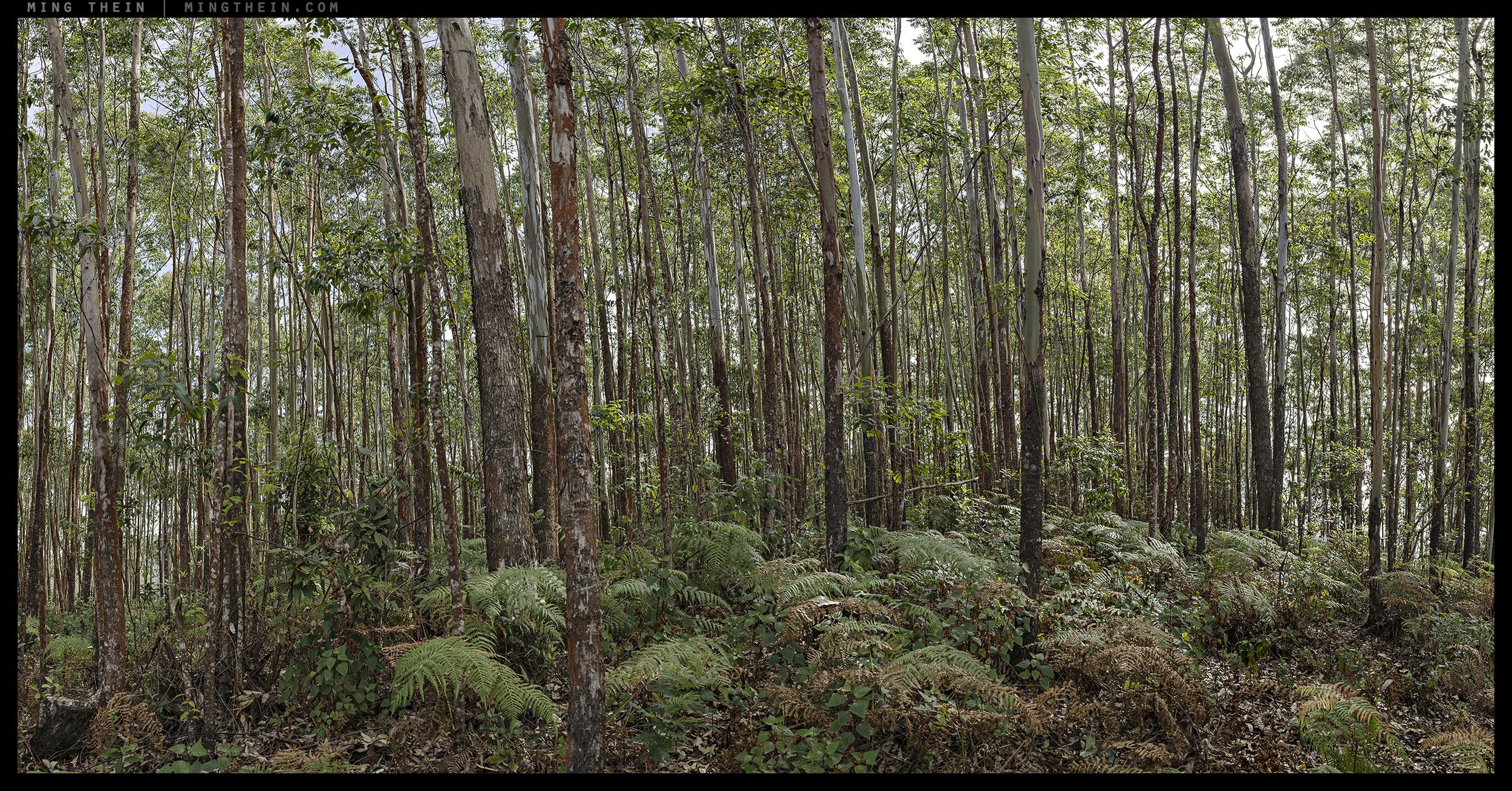 B0002073_B0002139 15k forest XXXV.jpg