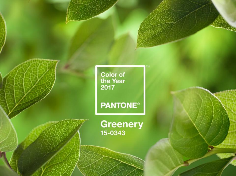 Greenery as Pantone's colour of the year 2017
