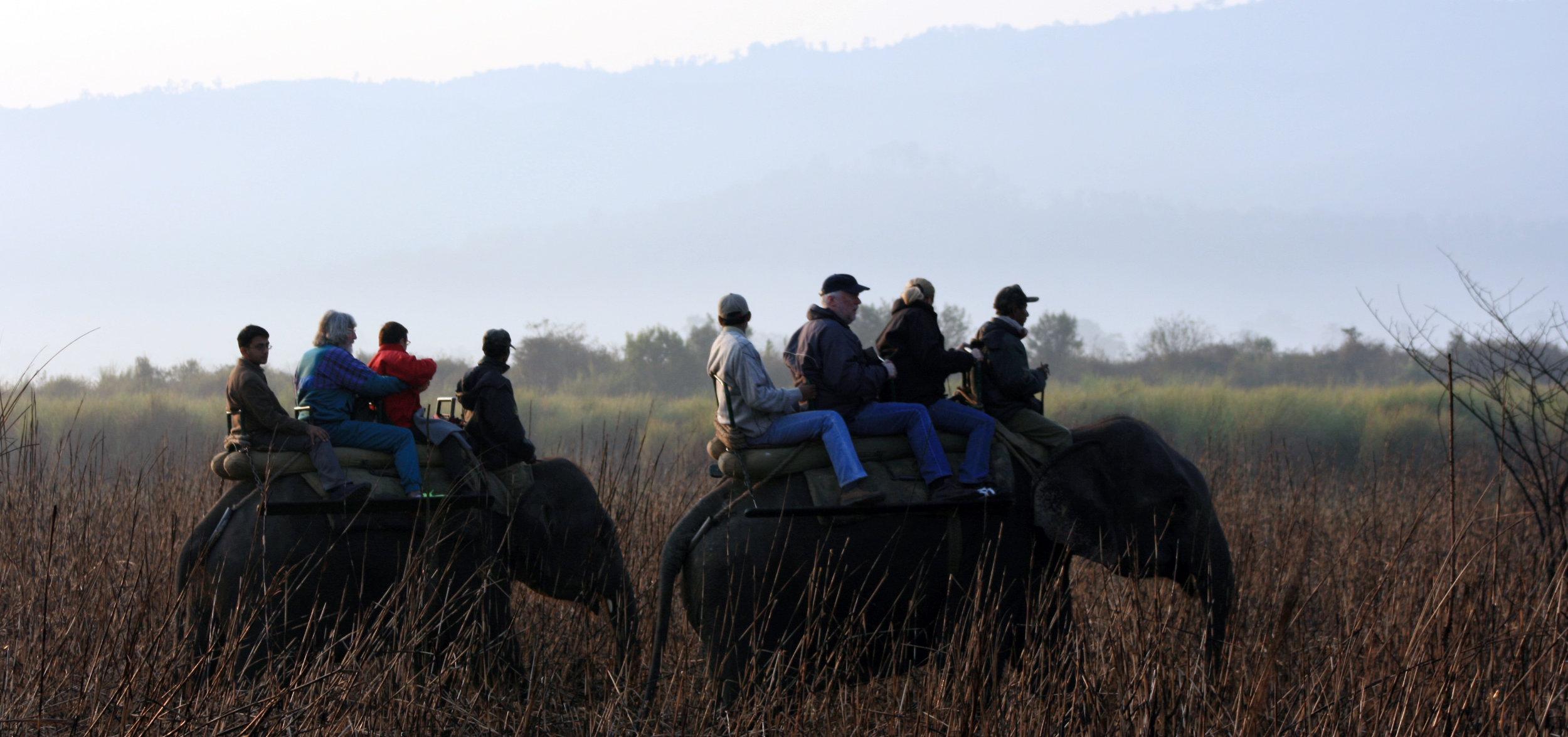 Elephant Ride at Kaziranga NP1.JPG