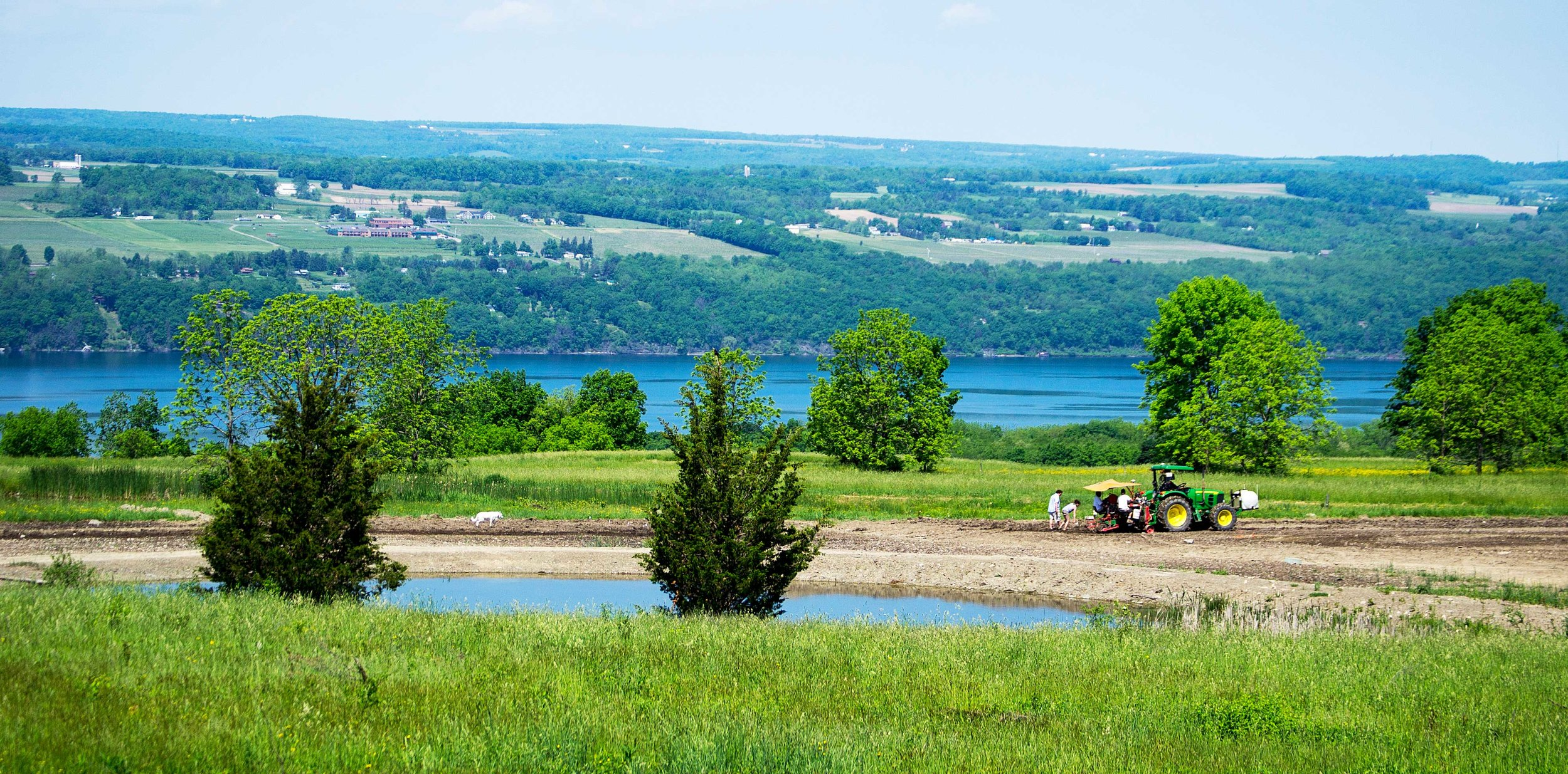 Forge Cellars Vineyard - Winery - Finger Lakes - New York - Seneca Lake