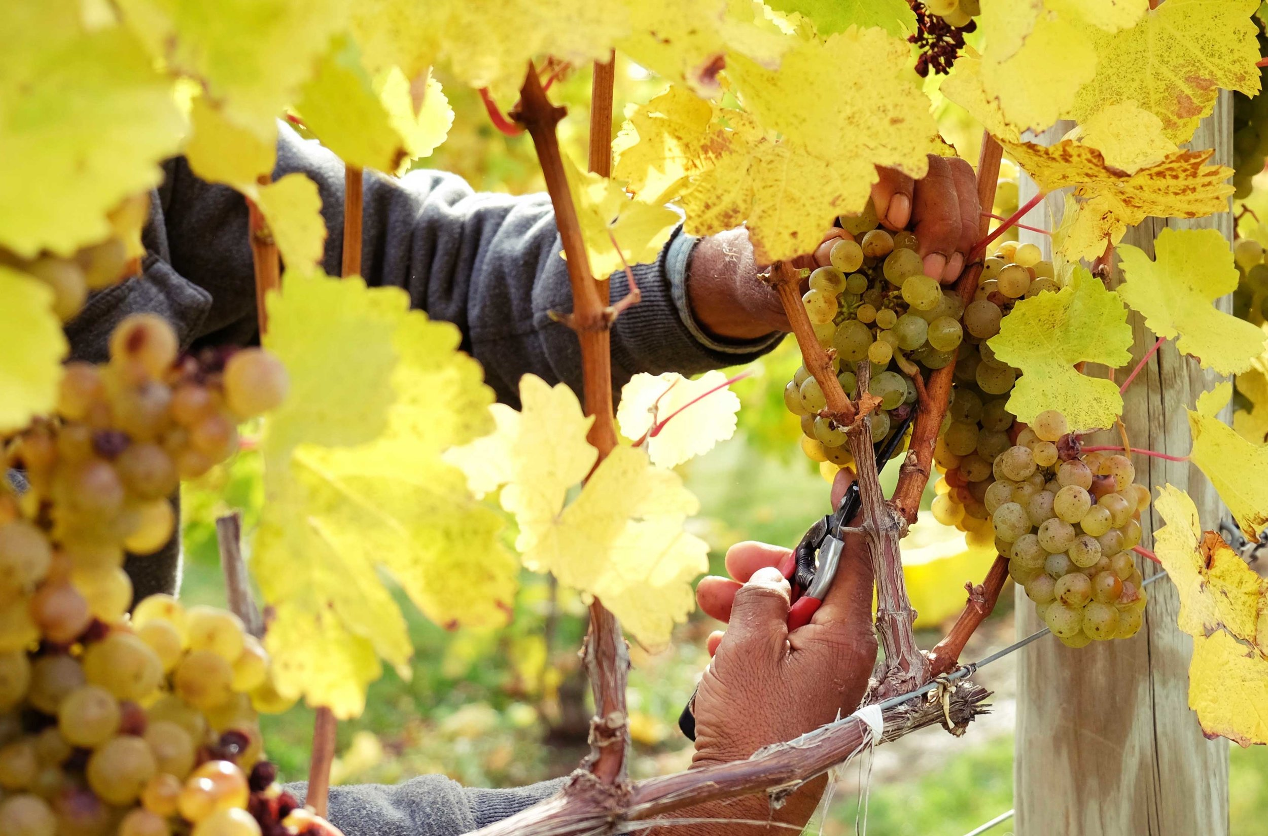 handharvesting_WEB.jpg
