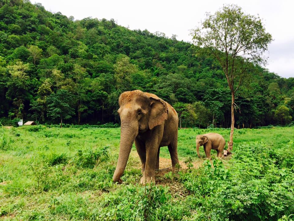 Elephan reserve in Chiang Mai
