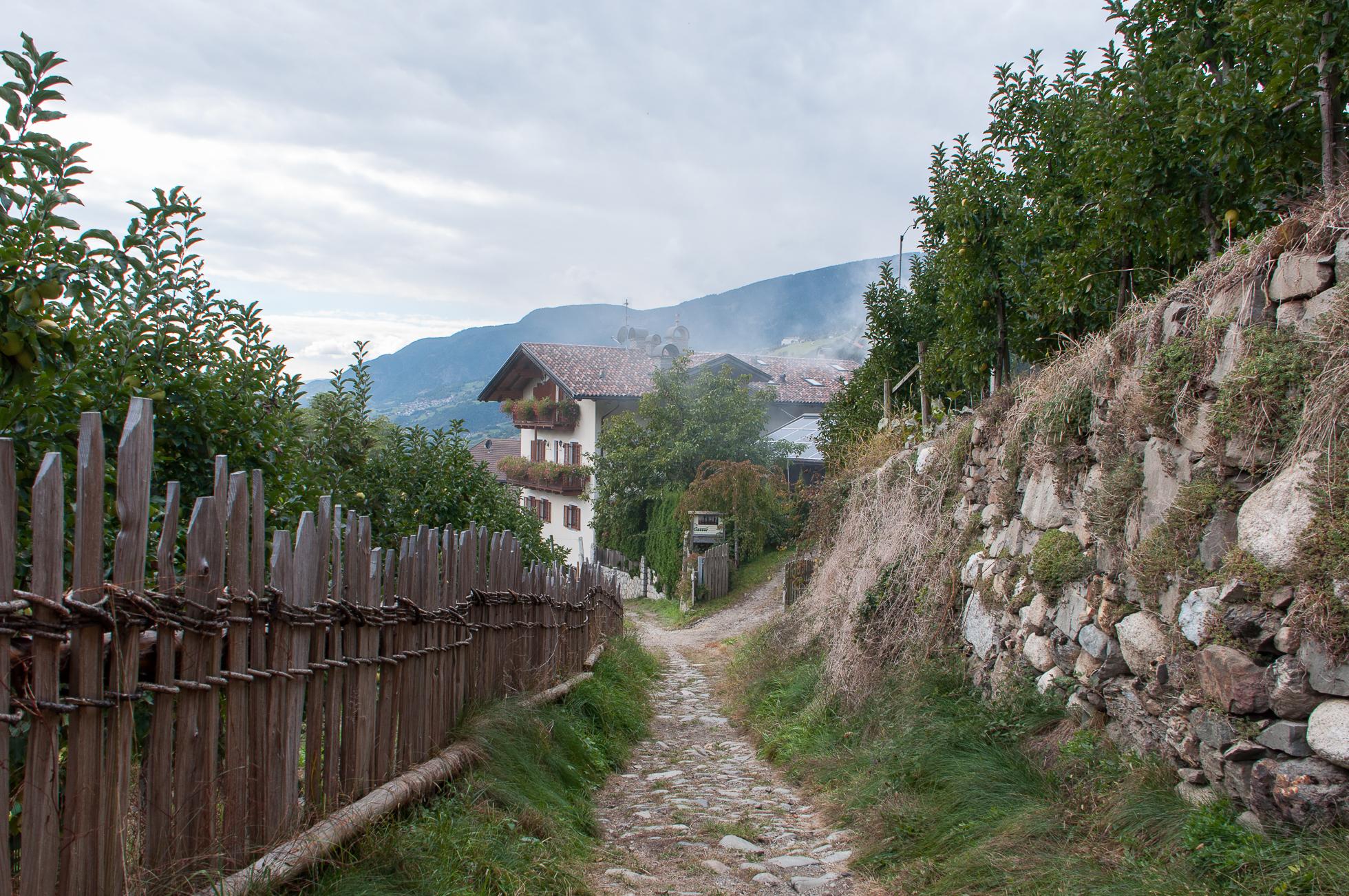 Sentiero delle castagne-6.jpg