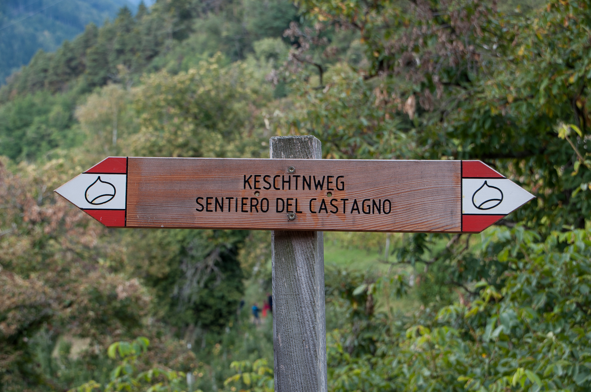 Sentiero delle castagne-4.jpg
