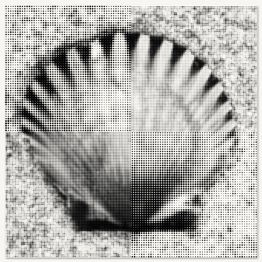 Scallop Shell - LARGE.jpg
