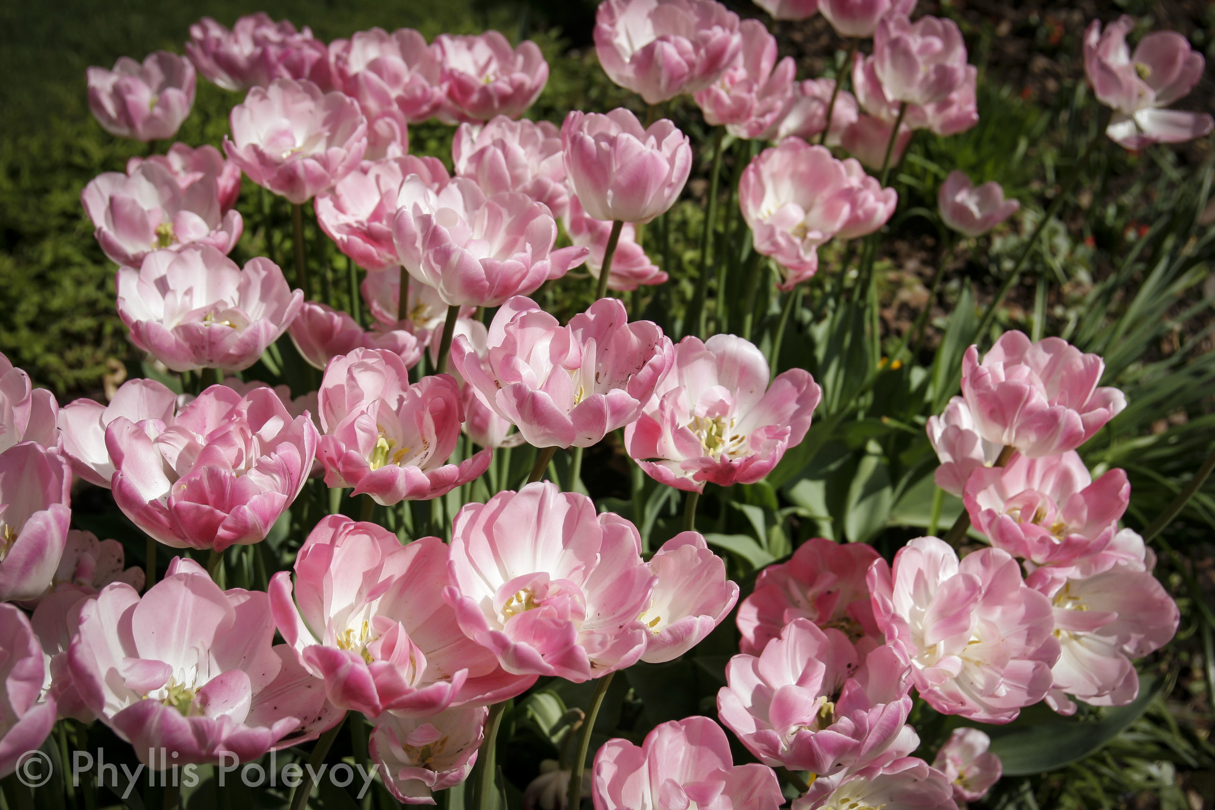 The Gardens, #002