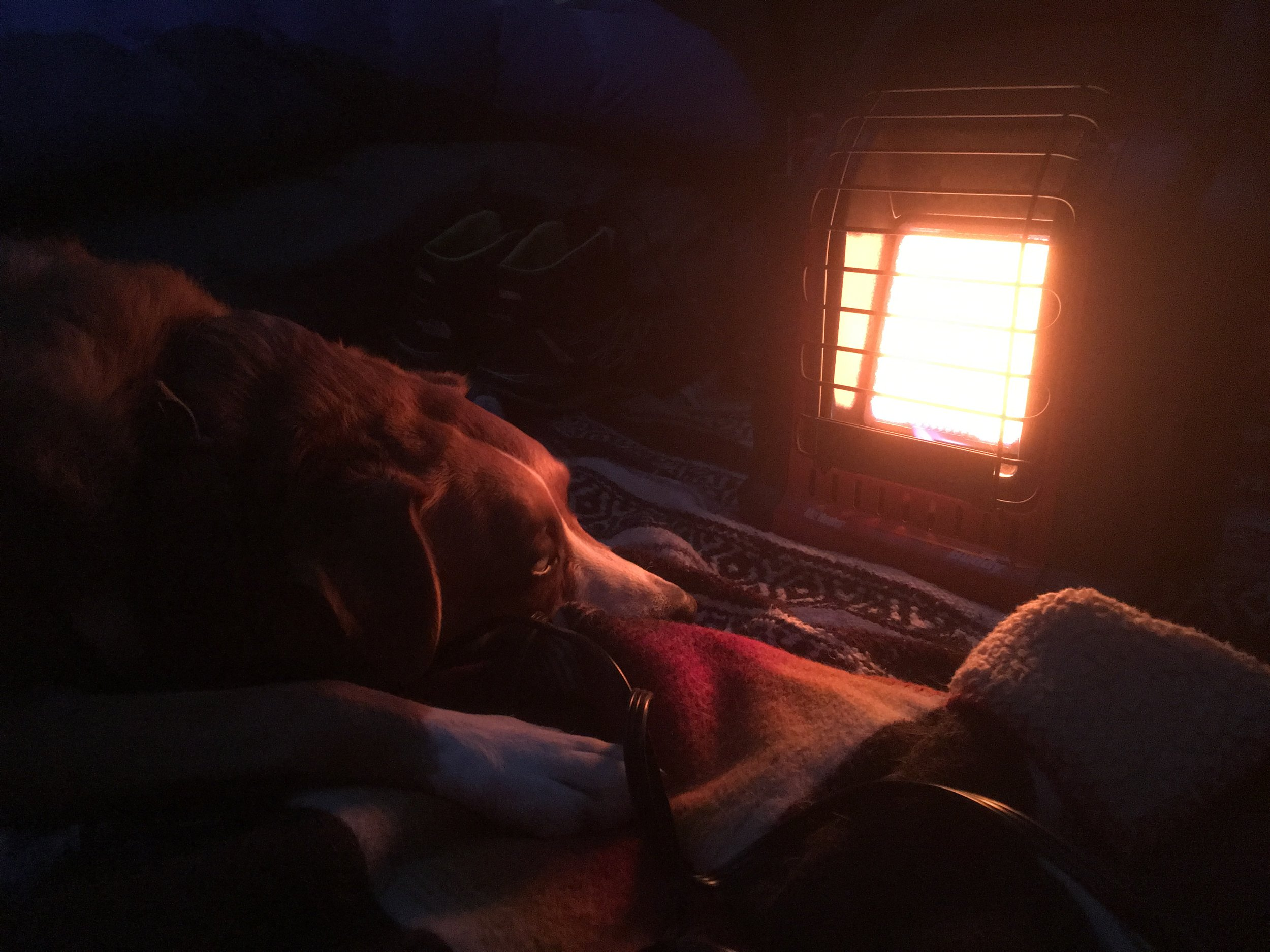 Dog warming by heater