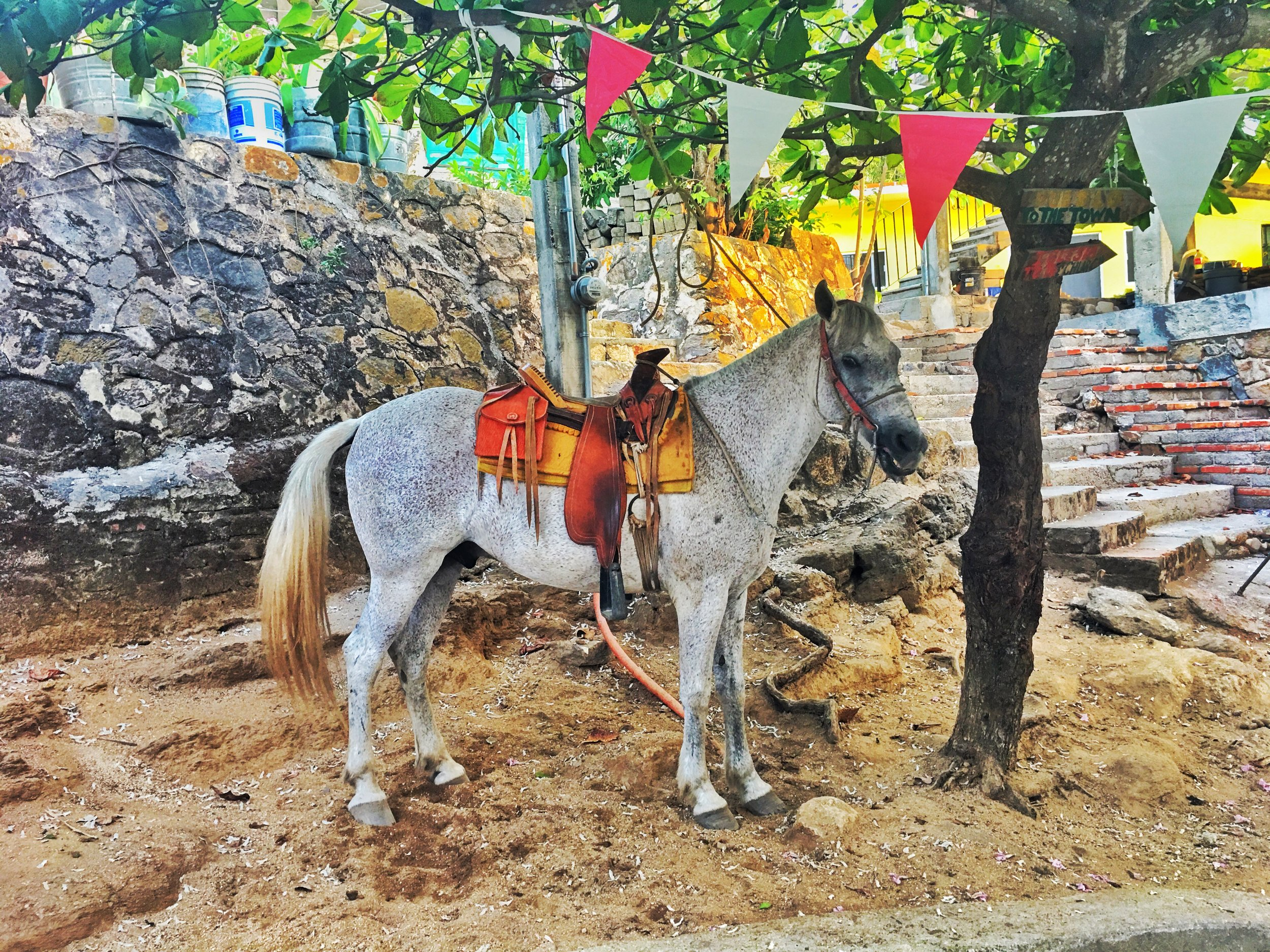 The only transportation in Yelapa town