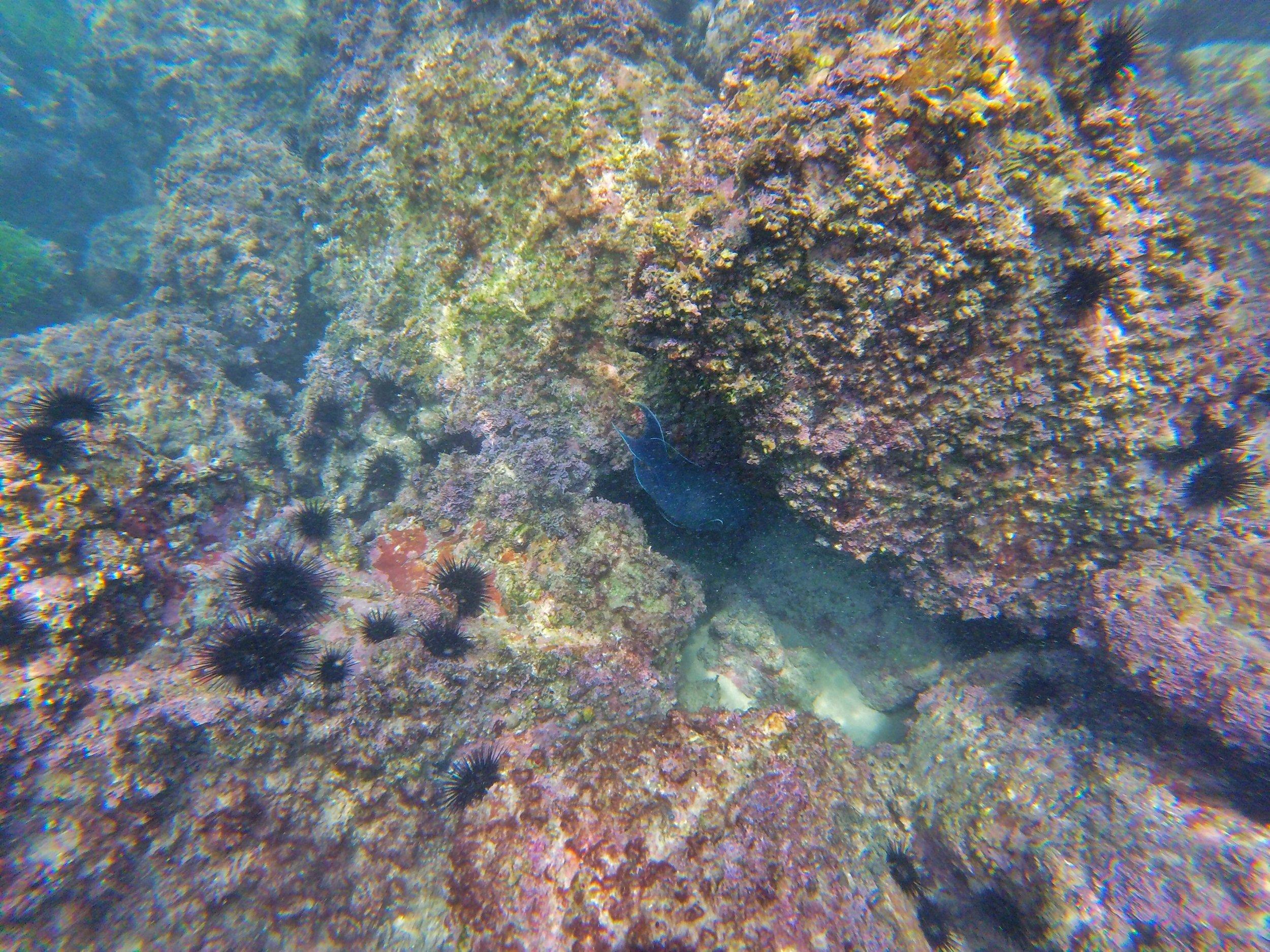 Sea caves & sea urchins