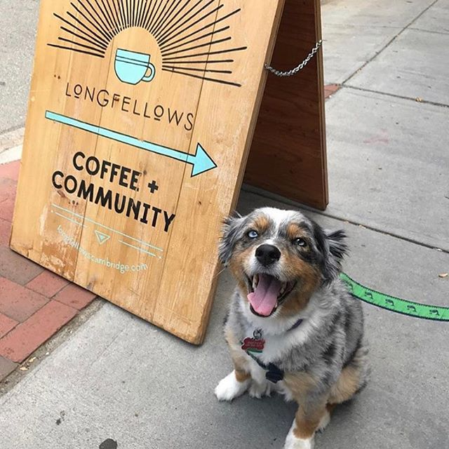 Your furry friends are ALWAYS welcome to hang outside while you pick up some coffee and breakfast — bonus if they pose by our sign! ✨🐶☕️💗✨