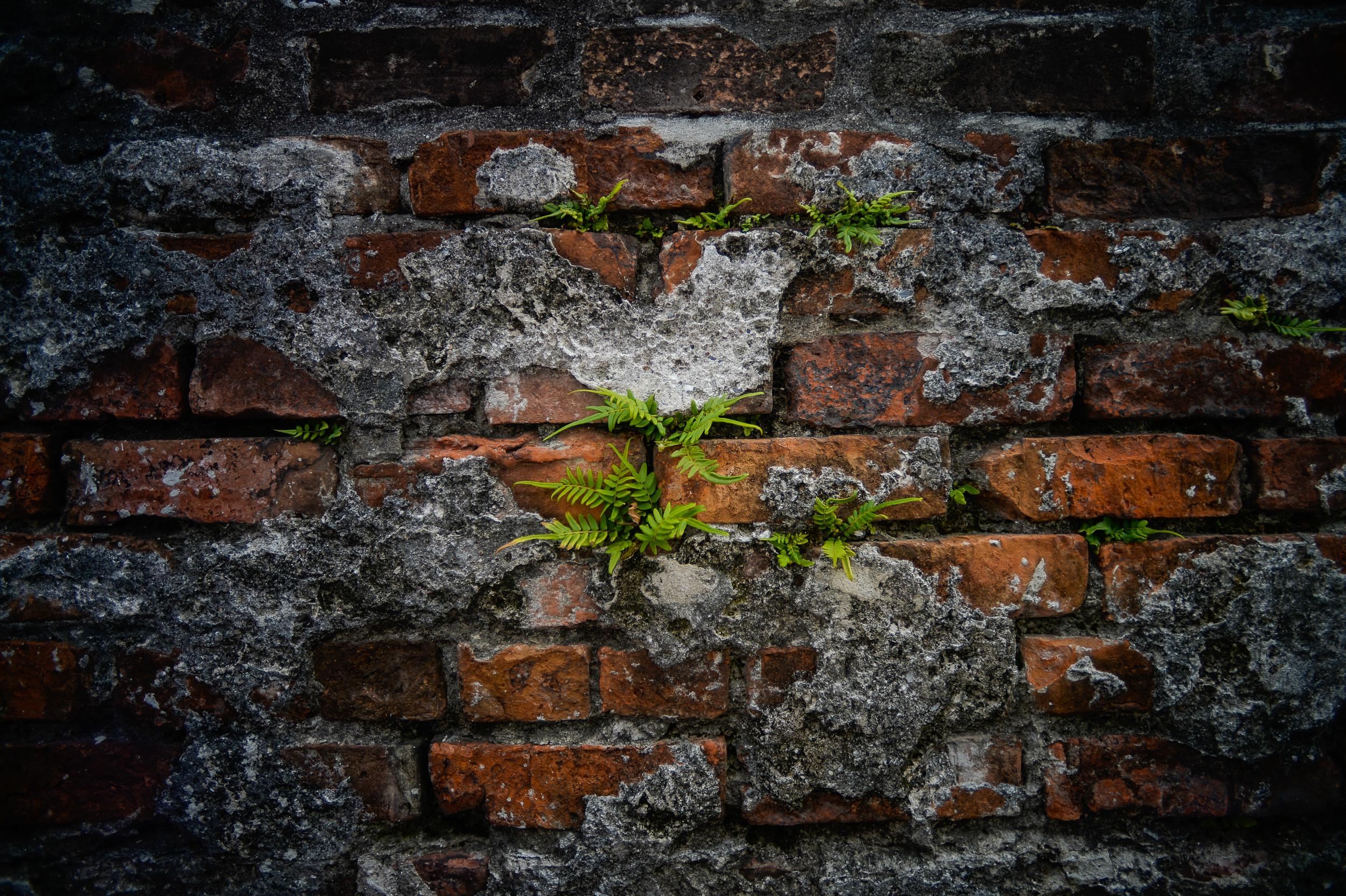 Crypt Ferns