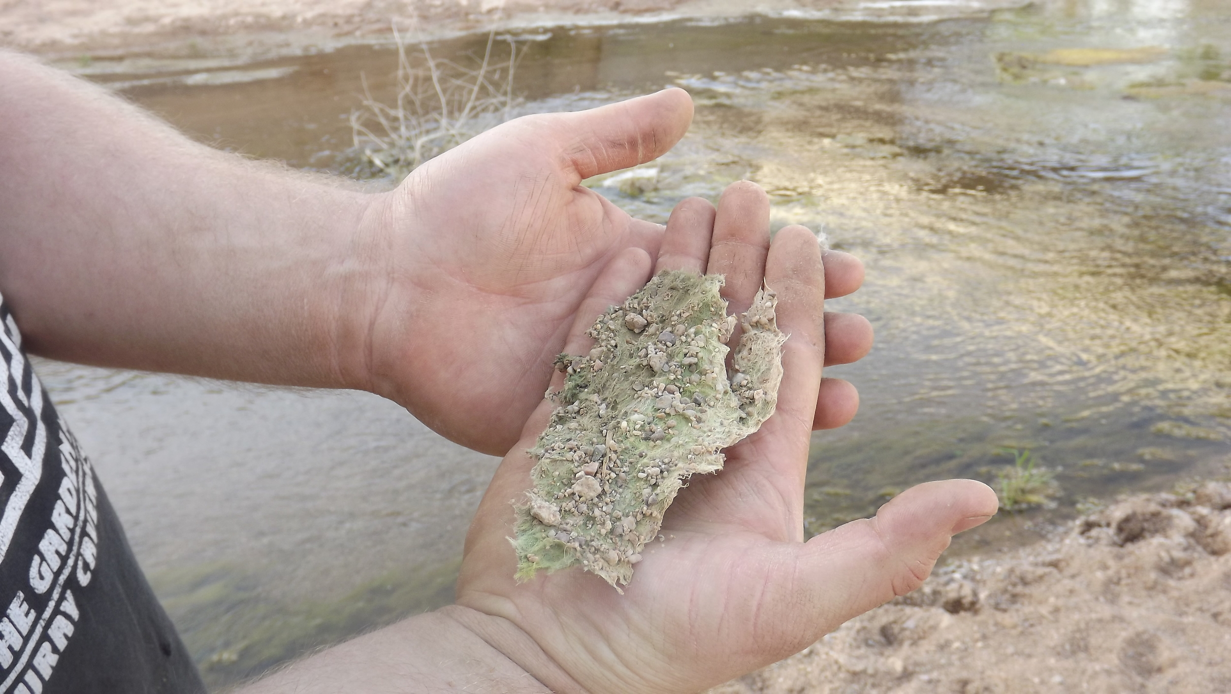 Dried algae on the bank of the San Pedro