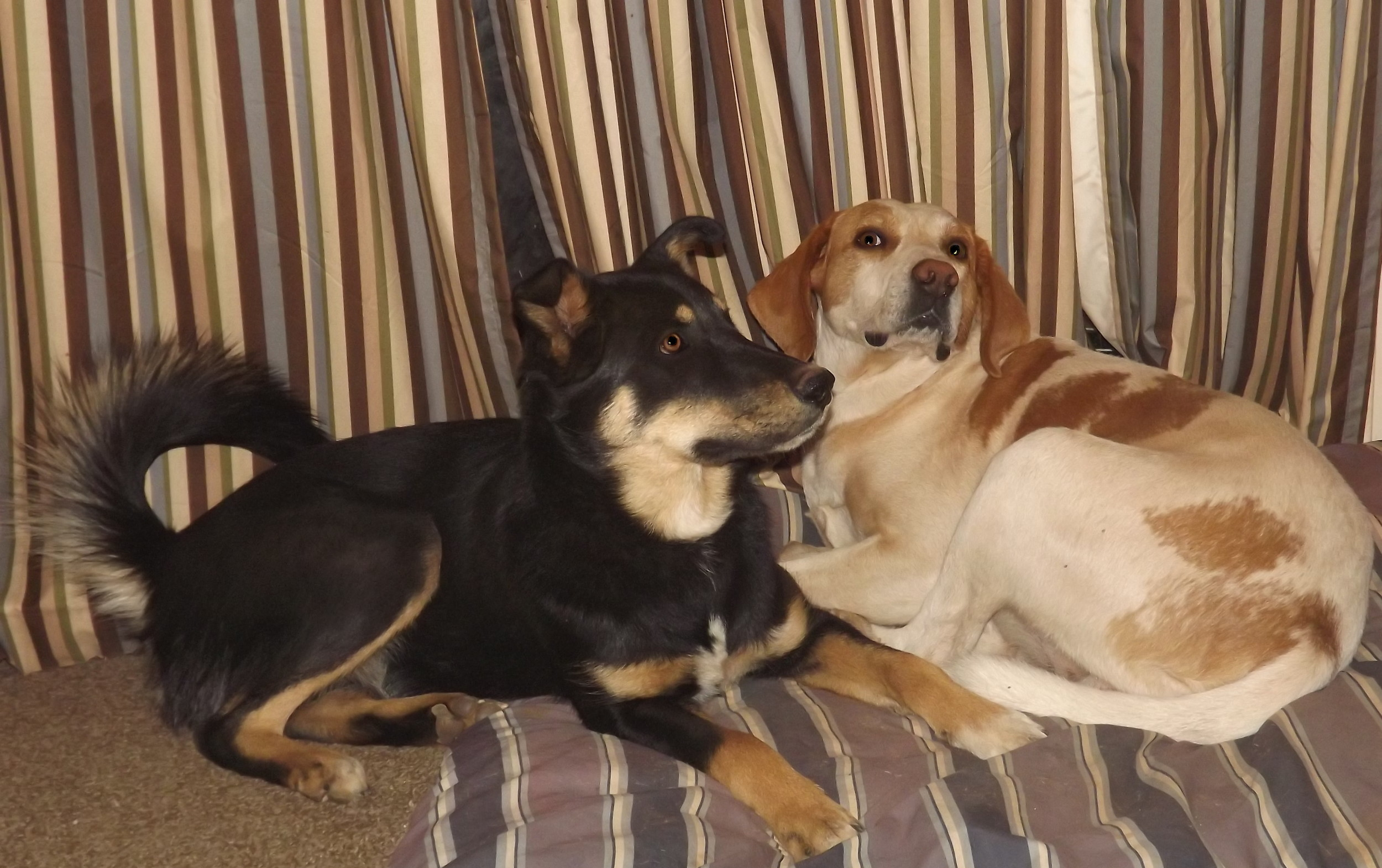Dogs -Pupi and Jake