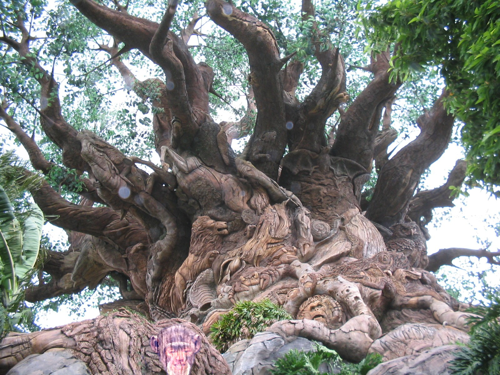 How many animals can you find in the Tree of Life? Hey, there's a grumpy person on here!- Two Grumpy People, 2015