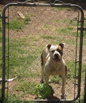 My nephew's dog, Killigan, Clovis, NM - Author's collection