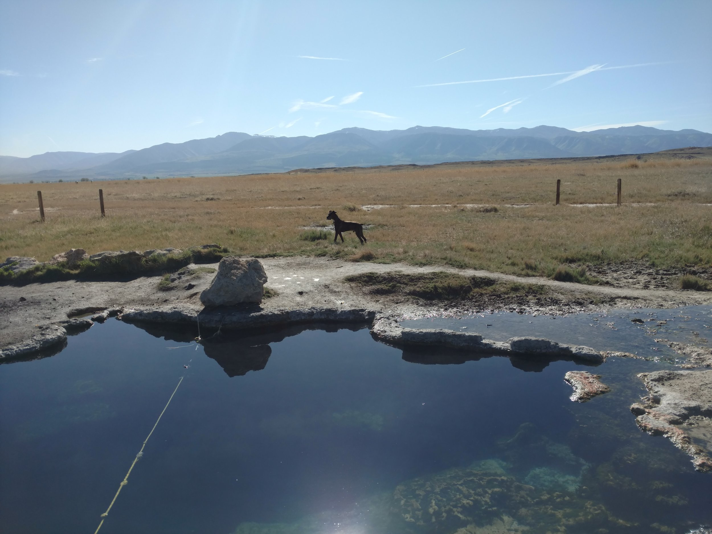 An old dog enjoyed taking break from the campervan rental at Meadow Hot Springs on our way home to Salt Lake.