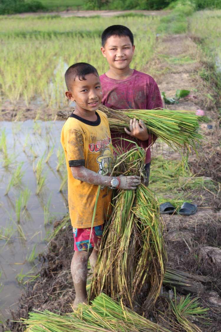Rice-planting_OPTIMISED.jpg