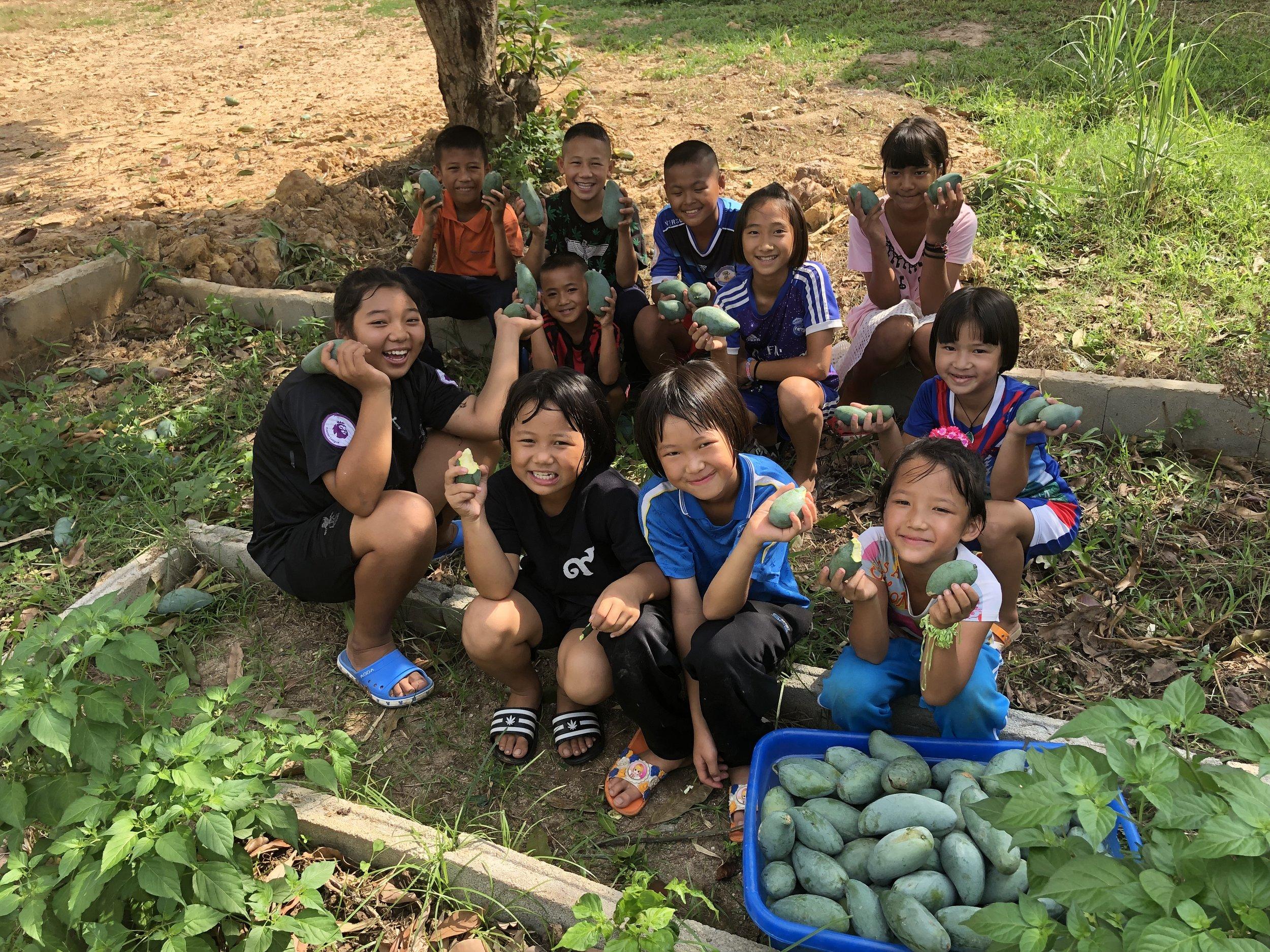 Mango-sesong i Thailand, til store glede for liten og stor – Foto: Knut Inge Bergem