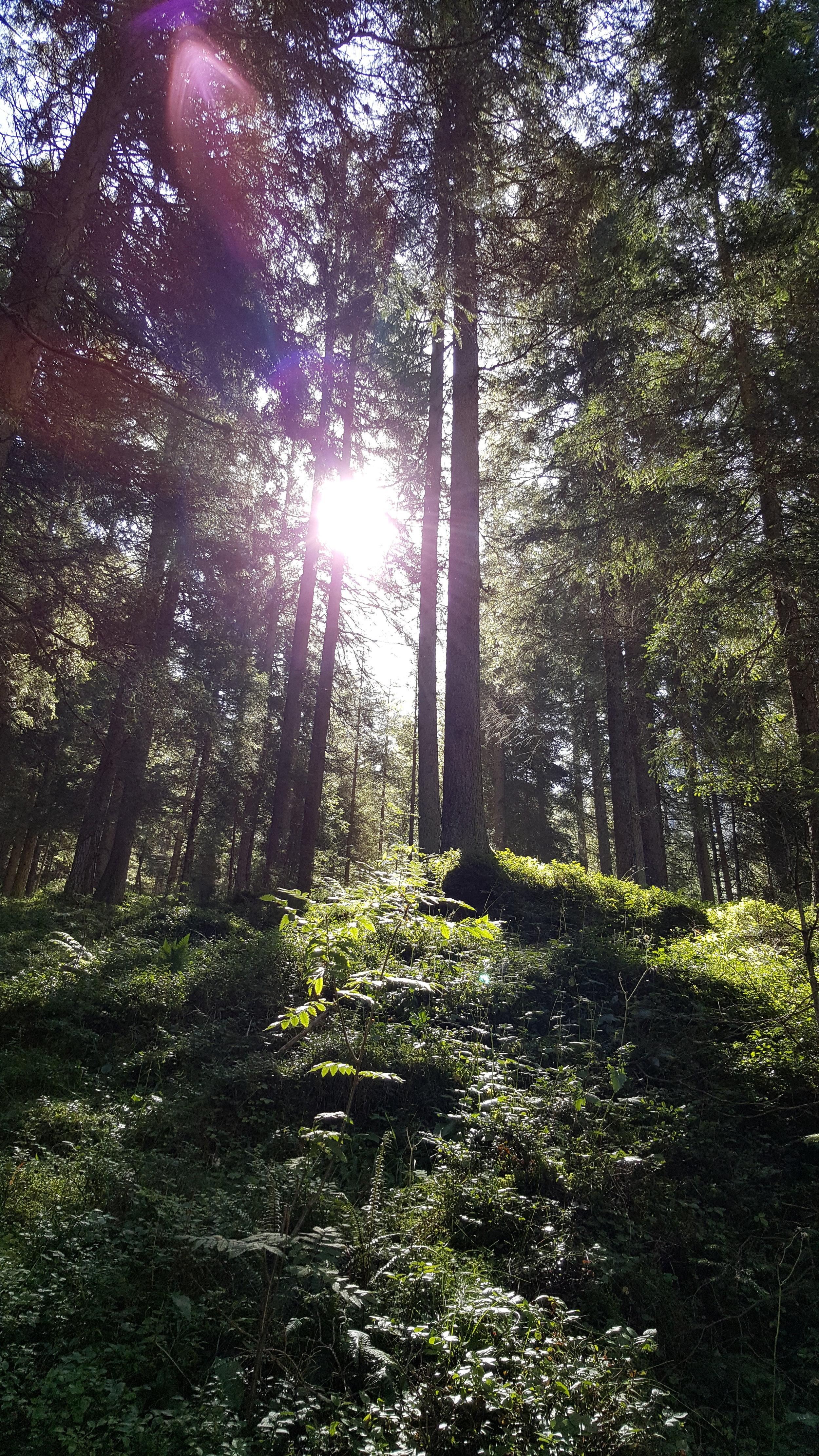 Sonne blinzelt durch die Bäume