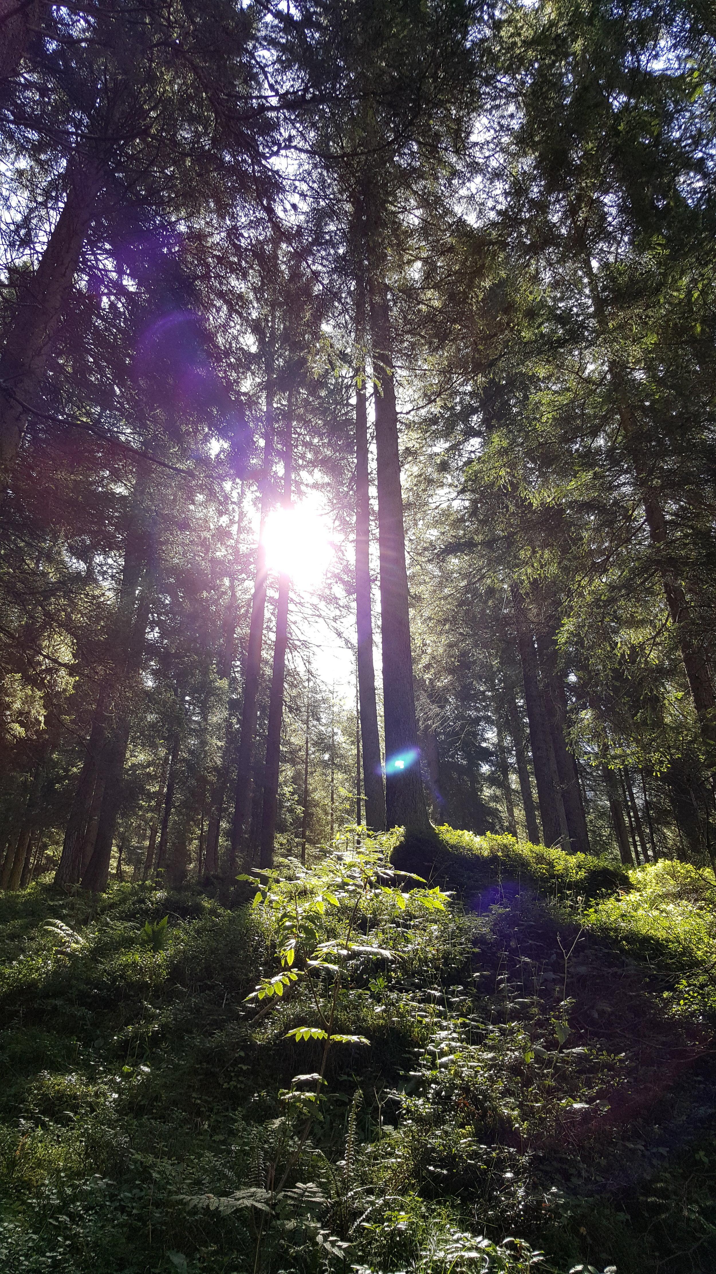 Sonne Richtung Höllensteinhütte