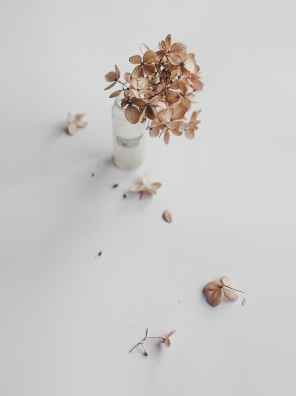 Dried Flower by Hilde Mork