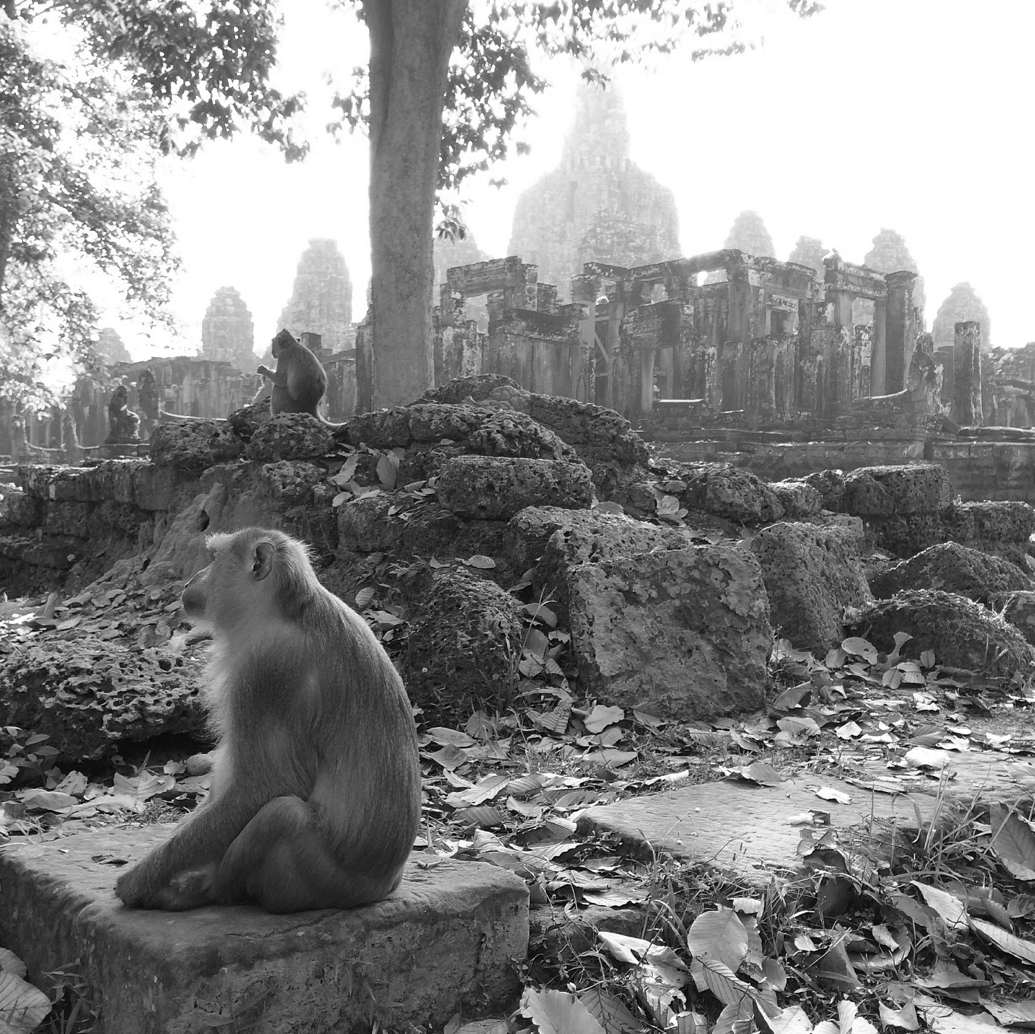So many amazing things to see, Angkor Wat could turn anyone into a professional photographer