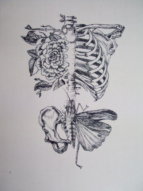 Living bones. (Art credit  here .)