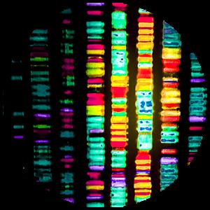 Genetics DNA Biometrology
