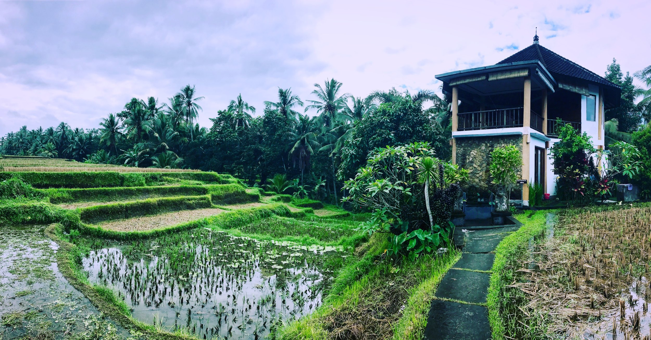 A pic of the Ubud Yoga House where we took our second yoga class -- It requires a 10 minute walk through rice paddies to get there, but so worth it!