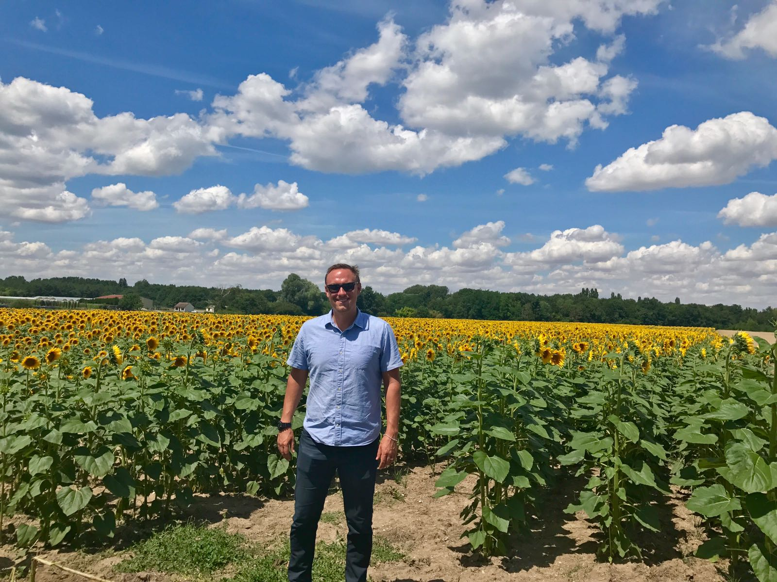 In addition to grapes, many other crops are farmed in the Loire -- like sunflowers!