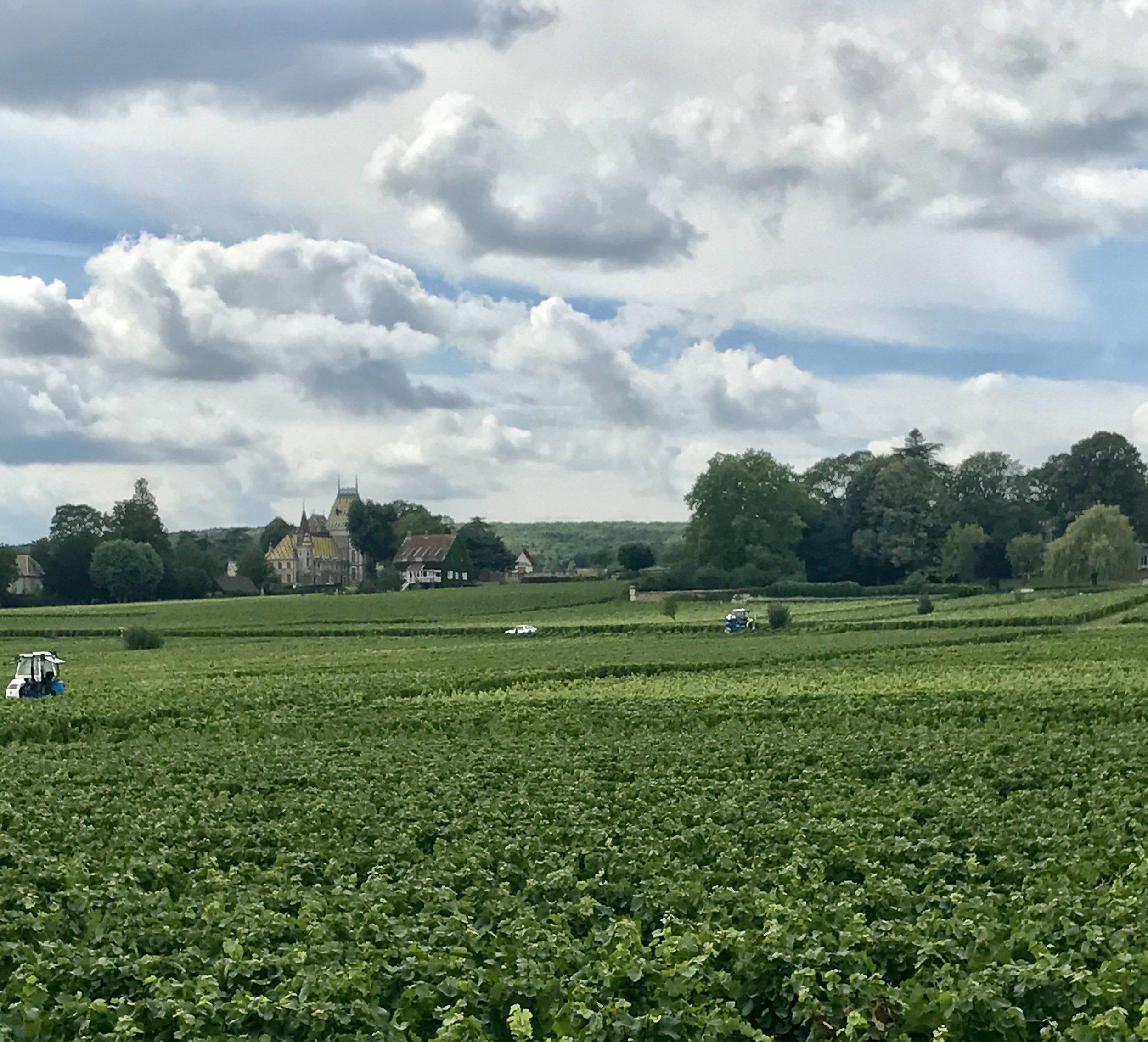 Vineyards forever in Burgundy
