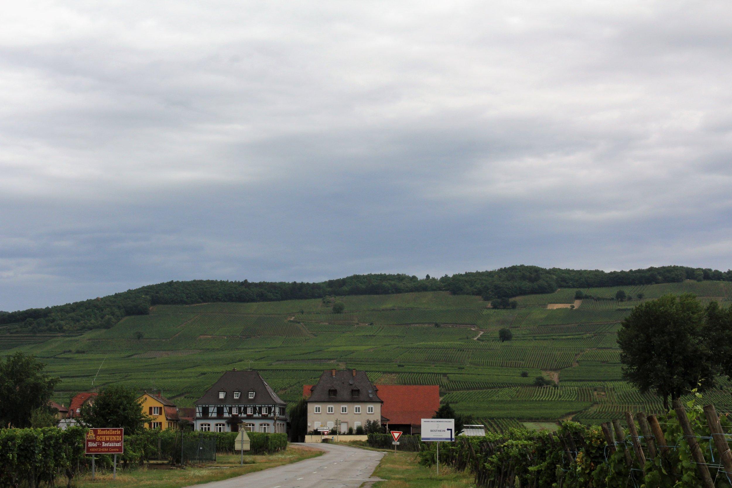 Alsace's rolling hills of vineyards