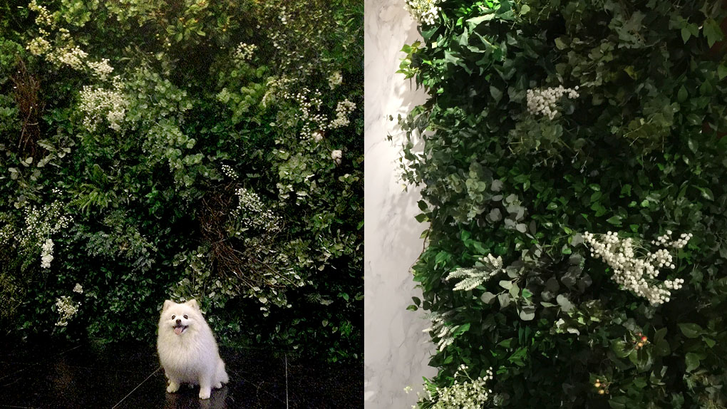 G R E E N E R Y  MoMo & our signature super natural Green Wall.  Have you ever thought of your beloved pet become a model for shoot!