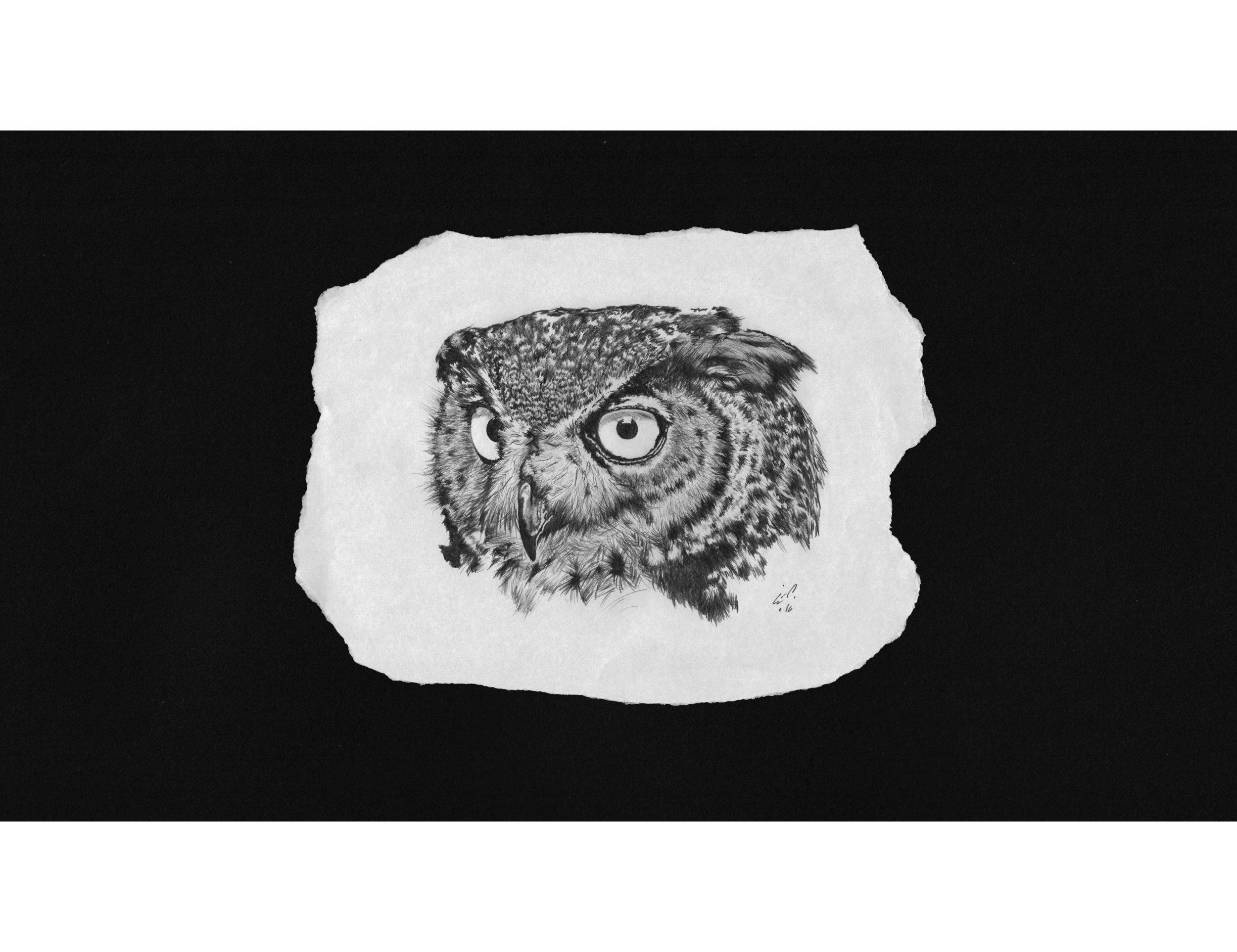 A pet  owl