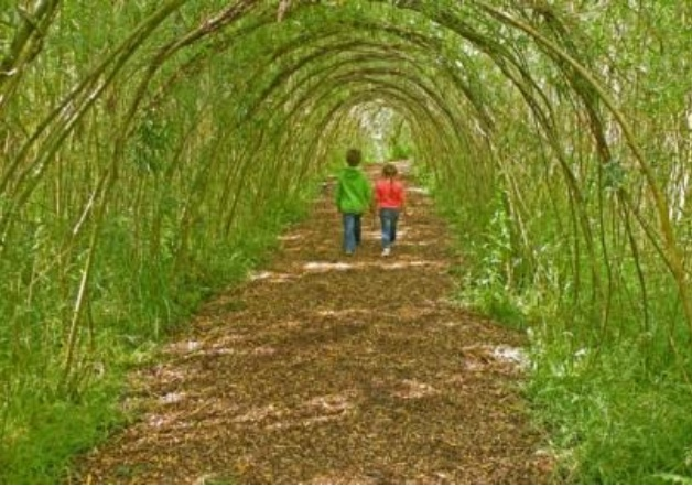 An image of what the arched willow trees could look like, if properly trained after the young willow shoots are planted.