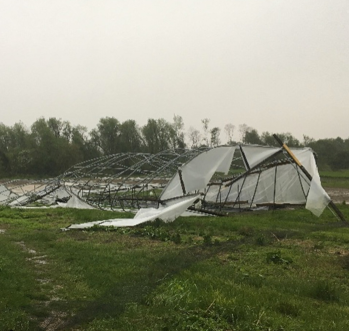 The greenhouse that protects the fledgling tomatoes at Common Ground Farm.  Photo Credit: Common Ground Farm