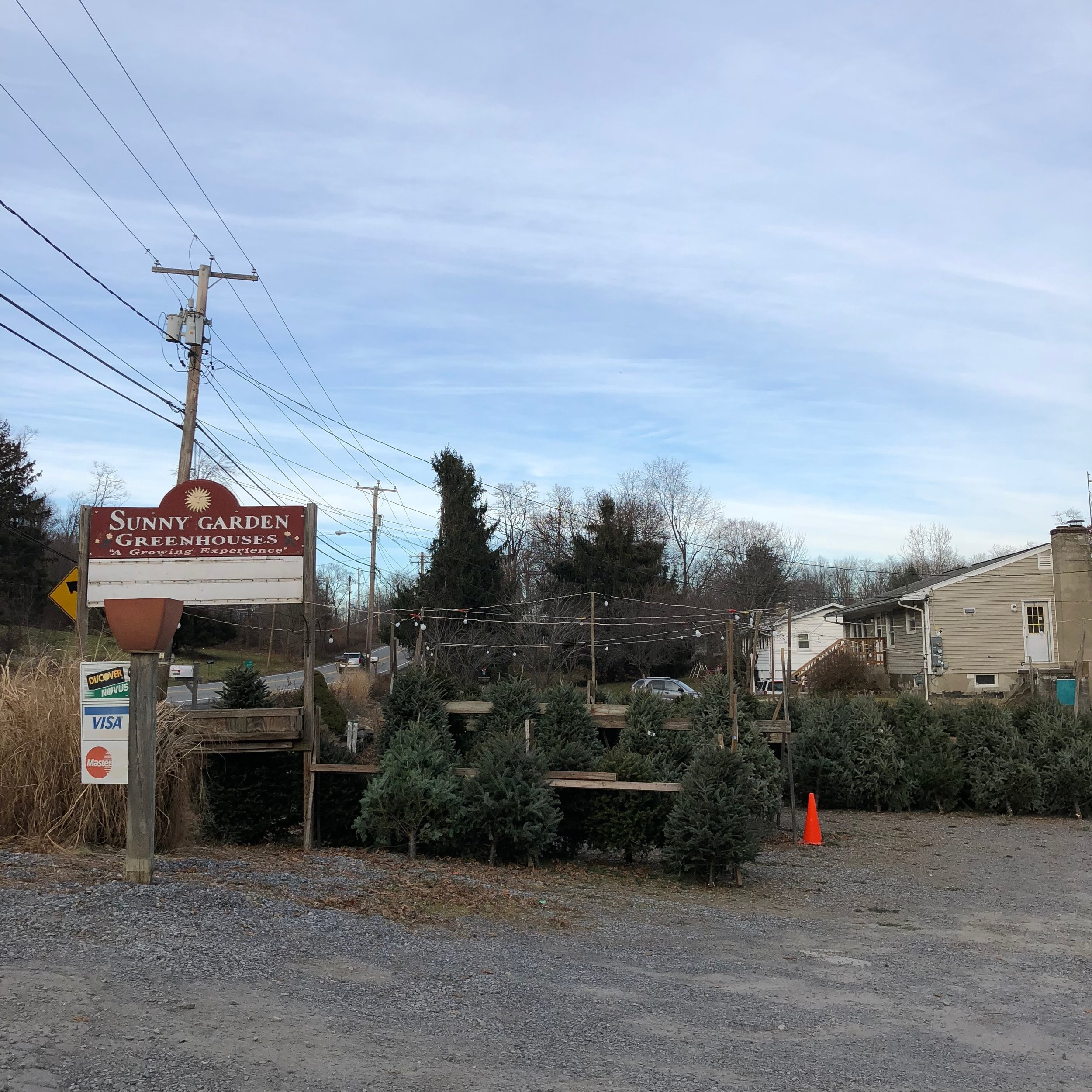 sunny gardens christmas trees in lot no snow.JPG
