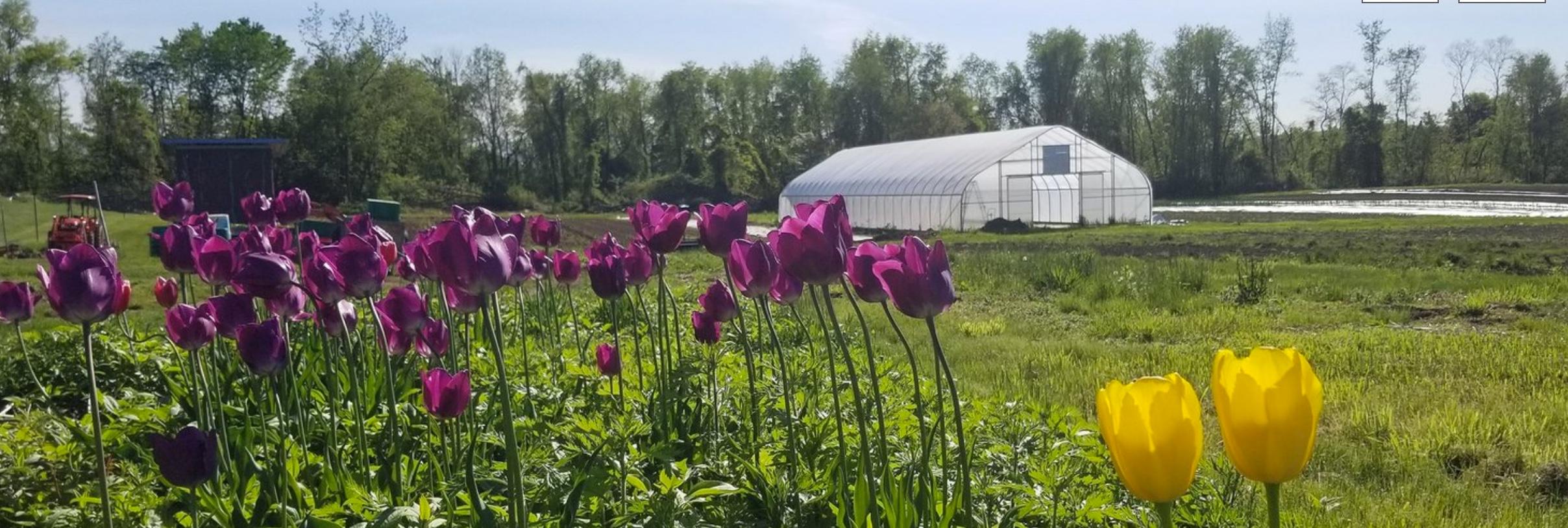 Photo Credit:  Common Ground Farm