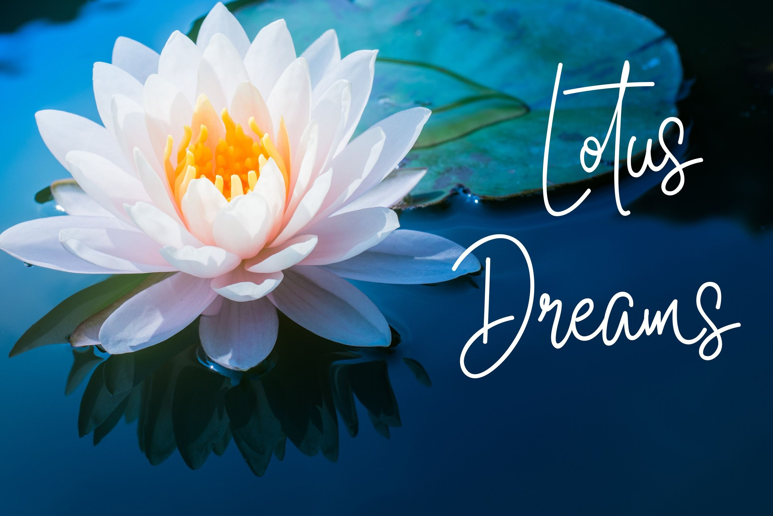 Valley Loves Lotus Dreams 2