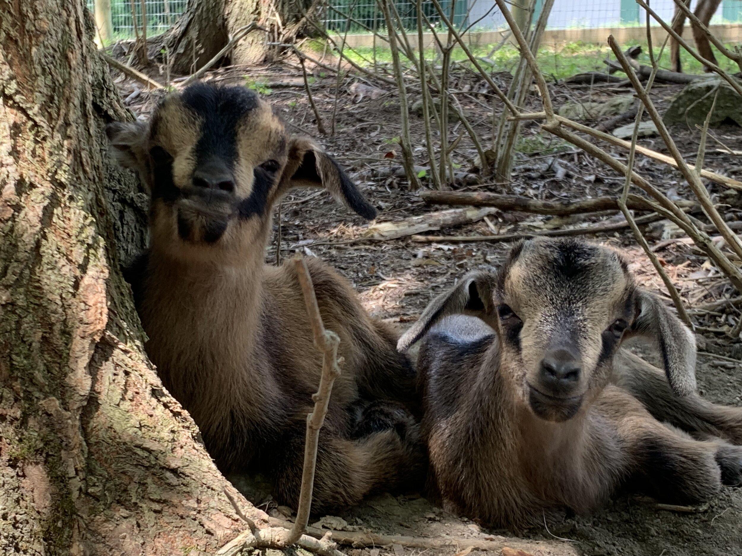 New Babies -
