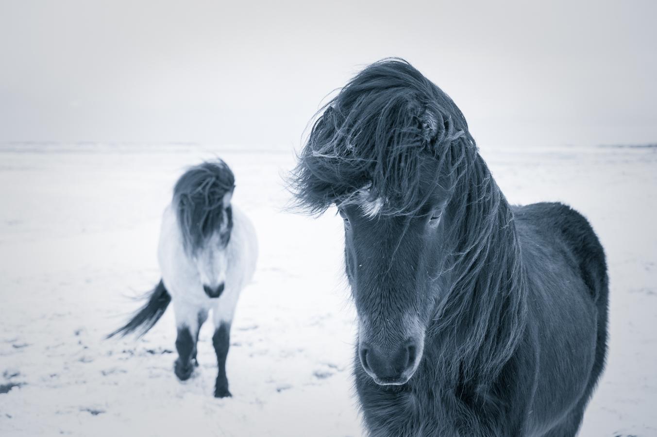 Iceland -6.jpg