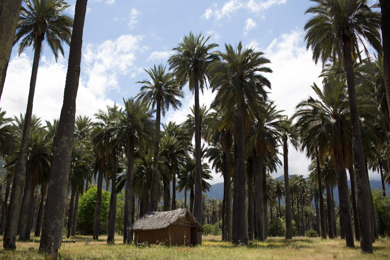 hacienda-2.jpg